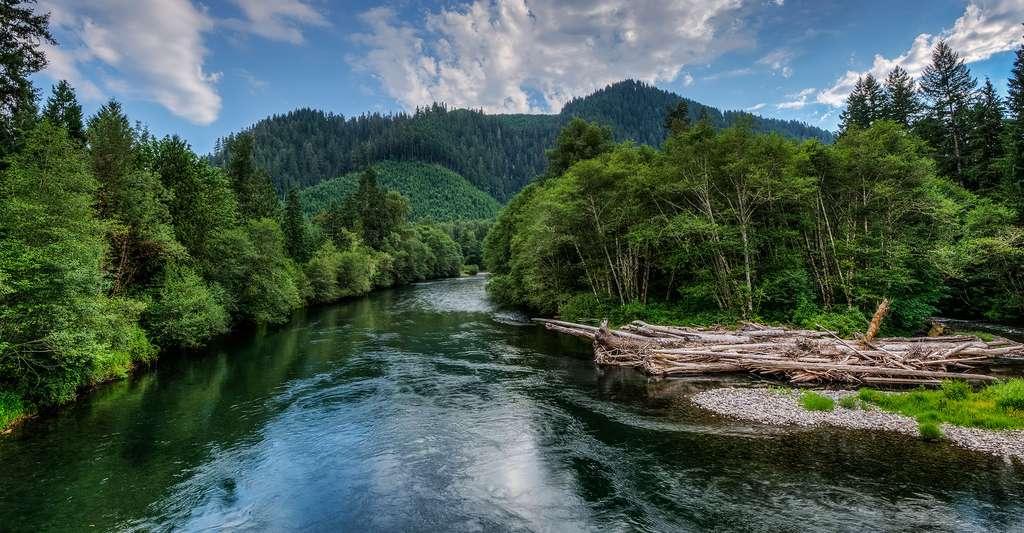 Eaux vives, courants faibles : quels sont les biotopes des poissons d'eau douce ? Ici, la rivière McKenzie, dans l'Oregon (États-Unis). © Spec.B, CC by-nc 2.0