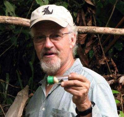 David Roubik, du Smithsonian Tropical Research Institute, exhibe une abeille capturée. © STRI