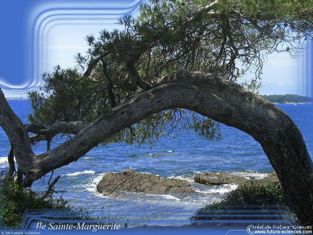 Ile Sainte-Marguerite près de Cannes
