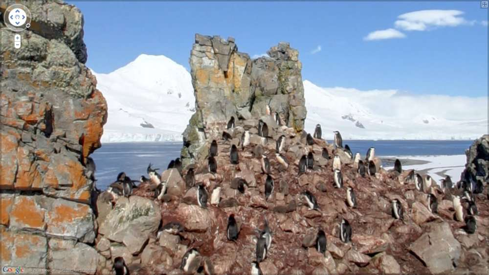 Des manchots filmés à leur insu par le service Google Streetview, quelque part dans les Shetland du Sud, un archipel situé à 120 kilomètres au nord de la péninsule Antarctique. © Google