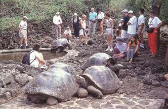 Le tourisme est très réglementé dans l'archipel des Galápagos. Tous les visiteurs doivent être accompagnés d'un guide. En 2008, 173.000 touristes ont visité l'un des 70 sites autorisés. © Unesco, Daniel Fitter