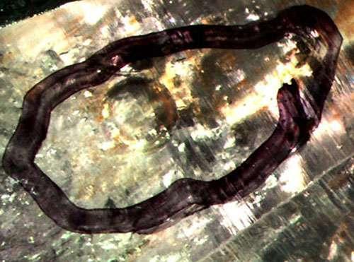 Liquide et gaz dans du quartz.
