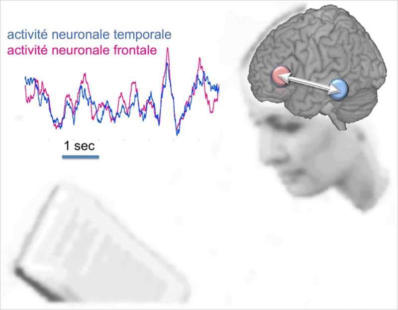 Ce schéma illustre les fluctuations de l'activité électrique haute fréquence produite par les neurones des régions temporale (bleu) et frontale (rose) de l'hémisphère gauche du cerveau lors de l'analyse de chaque phrase. © Inserm