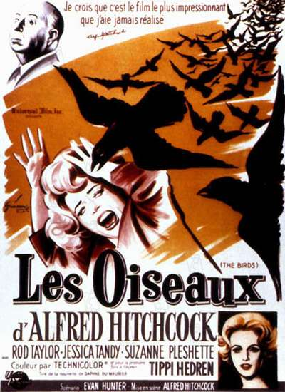 Alfred Hitchcock, qui possédait une villa à Santa Cruz, s'est inspiré de l'invasion des oiseaux qu'a subie cette ville pour réaliser son film Les Oiseaux sorti en 1963. De nombreux oiseaux ont percuté les maisons tandis que d'autres, sans doute attirés par la lumière, se précipitaient vers les personnes sortant des maisons. © Universal Pictures