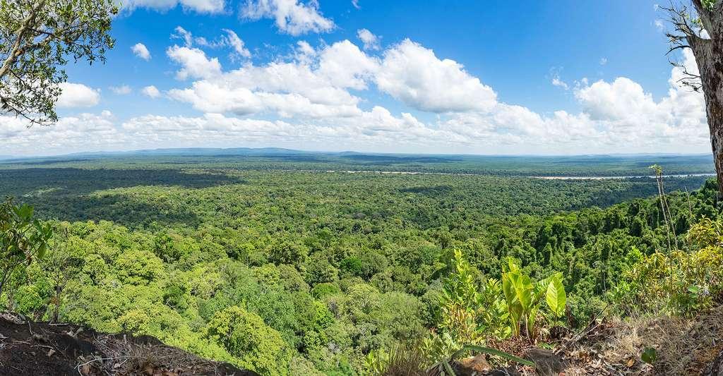 Qu'est-ce que l'ethnopharmacologie ? Ici, vue sur les forêts primaires de Guyane. © Gail Johnson, Shutterstock