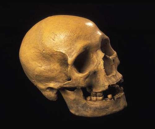 Homo sapiens de l'abri Pataud