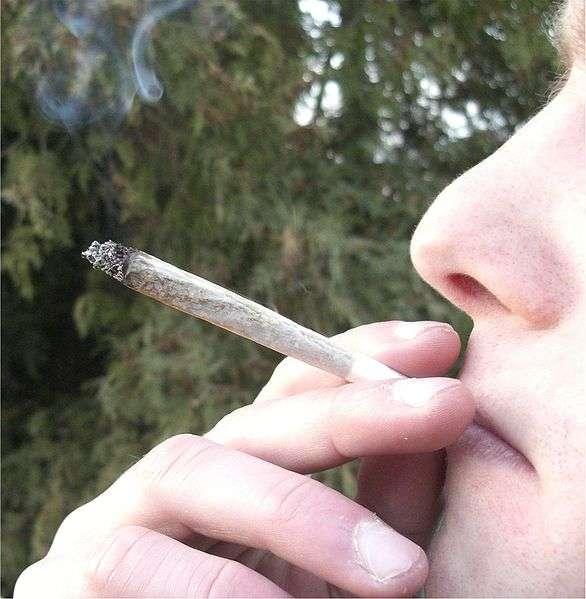 Le cannabis, issu du chanvre, détériore le cerveau, ce qui entraîne des répercussions sur un certain nombre de facteurs intellectuels, mesurés par exemple par les tests de QI. © Chmee2, Wikipédia, cc by sa 3.0