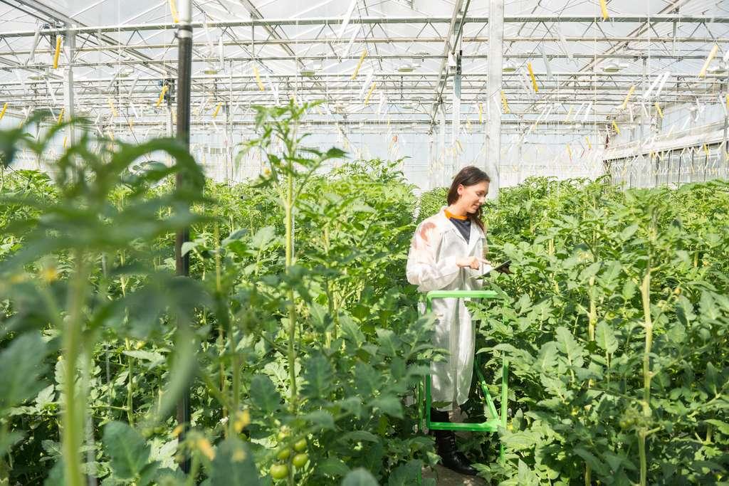 Le botaniste peut se spécialiser sur une variété de plantes afin d'en faire l'inventaire ou de l'utiliser à des fins industrielles. © corepics, Fotolia.