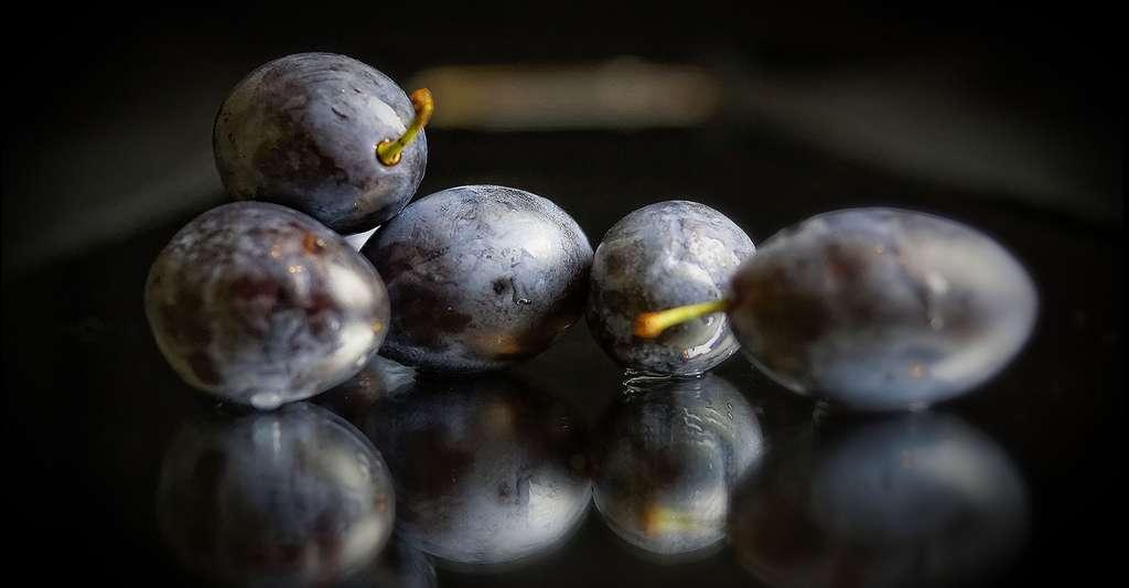 Le prunier : fleurs, feuilles et taille. Ici, des quetsches, ou prunes de Damas. Cette variété serait originaire de Syrie. © Uwe Tuchen, Pixabay, DP