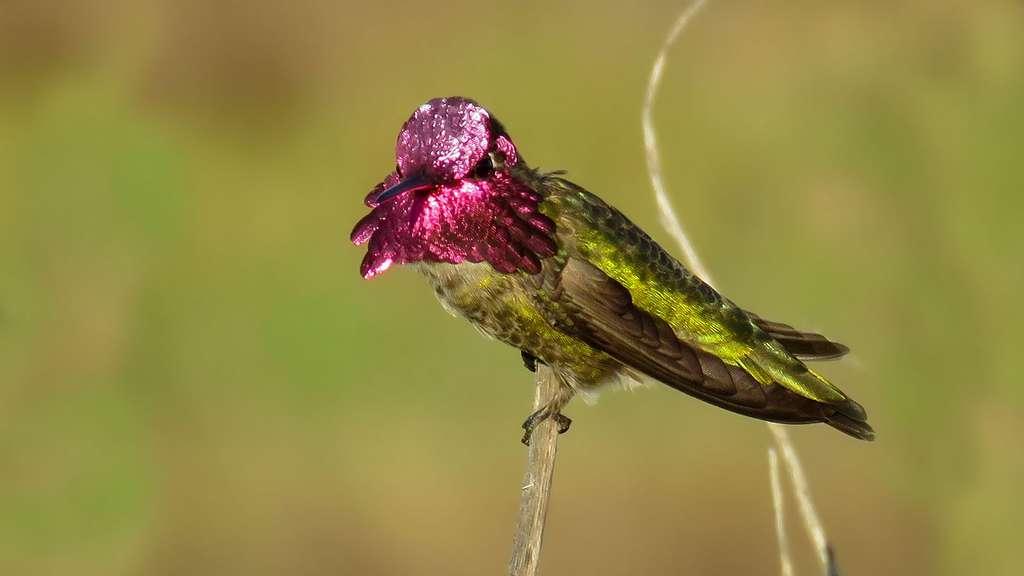 Le colibri aux mille couleurs