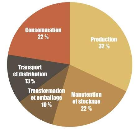 La majeure partie du gaspillage alimentaire intervient en aval et en amont de la chaîne alimentaire. © C.D., Futura, d'après BCG