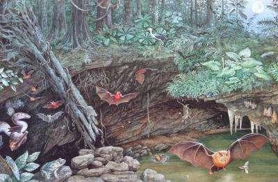 Cette vue d'artiste tente de représenter le lieu de la découverte il y a 17 millions d'années. Les ostracodes vivaient dans une mare au fond d'une grotte dans laquelle nichaient des chauves-souris. © Dorothy Dunphy
