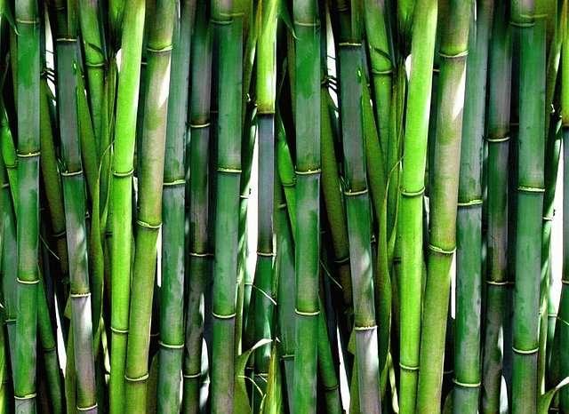 Les bambous sont d'excellents tuteurs, notamment pour certaines bulbeuses. © PublicDomainPicture, Pixabay, DP