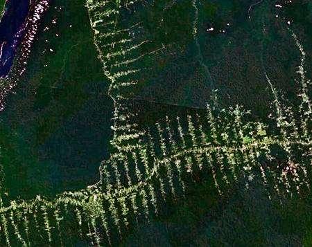 Déforestation en Amazonie, le long des routes principales, puis secondaires comme l'indique la structure caractéristique en arêtes de poisson. Crédit Nasa/Landsat 7