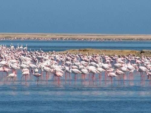 Walvis bay, Namibie.