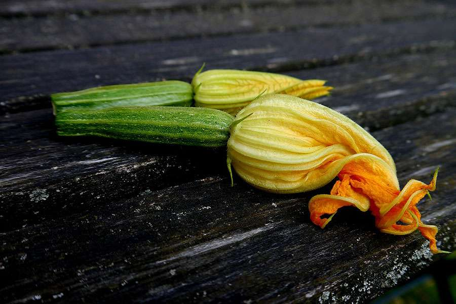 Seules les fleurs de courgettes femelles donnent des fruits. © Jhusemannde, Pixabay, DP