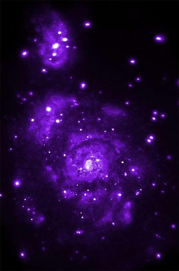 Des astronomes ont compilé plus de 900.000 secondes d'observation, échelonnées sur une décennie, de la galaxie du Tourbillon (M51) distante de seulement 30 millions d'années-lumière. Au lieu de la centaine de sources de rayonnement X débusquées auparavant, le nouveau sondage des entrailles flamboyantes des deux galaxies en a révélé plus de 500. © Nasa, STScI, CXC, Wesleyan University, Roy KilgardHyperactivité X au cœur du maelstrom de la galaxie M51Sensible au rayonnement X, le télescope spatial Chandra a donc fait parler les sources d'activité les plus intenses qui jalonnent les deux galaxies. Le dernier recensement en a relevé environ 500 (contre 100 précédemment) au travers de sondages totalisant plus de 900.000 secondes d'observation. La plupart de ces sources sont liées à des supernovae situées dans ou à proximité des innombrables nuages moléculaires qu'elles arborent.Rappelons que le rapprochement des deux galaxies a considérablement décuplé la fécondité des nébuleuses. En témoigne le nombre élevé d'étoiles binaires à rayonnement X (X-ray binaries ou XRB) qui y figurent. Ce sont des paires d'astres généralement constituées d'une étoile à neutrons (très compacte) et d'une étoile plus ordinaire, laquelle voit inexorablement sa matière arrachée par la première. Les gaz capturés sont échauffés à plusieurs millions de degrés et provoquent d'intenses flambées aussitôt (avec 30 millions d'années de retard, ici, pour nous), remarquées par Chandra. Pour les astronomes, une dizaine de cas cachent un trou noir et huit d'entre eux lapent la matière d'une étoile plus massive que notre Soleil.Actuellement beaucoup plus tranquille, la Voie lactée connaîtra (et a connu plusieurs fois) un sort comparable lors de sa rencontre à venir avec notre grande voisine, la galaxie d'Andromède (M31).