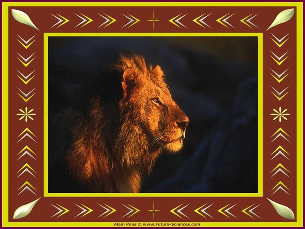Lion, le roi des animaux
