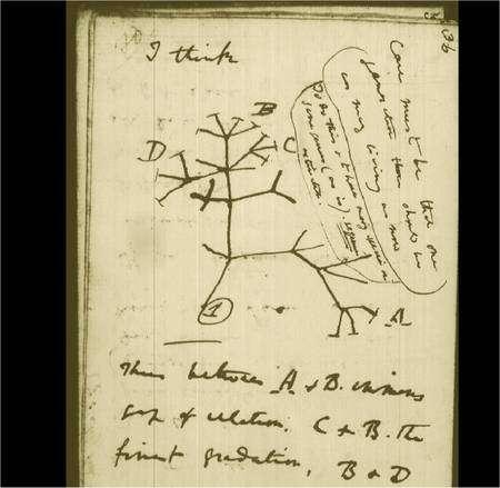 « Je pense », écrit Darwin au-dessus de ce dessin, qui montre une ramification d'espèces évoluant au cours du temps... © The Complete Work of Charles Darwin Online
