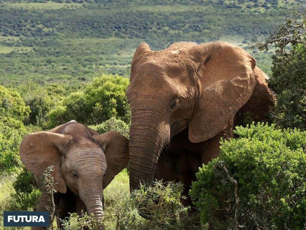 Éléphante et son petit
