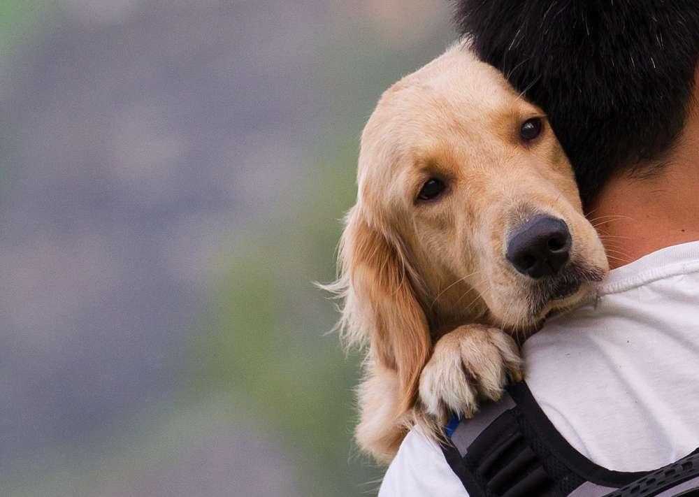 Un chien peut connaître votre humeur, une capacité qui n'était jusqu'à présent attribuée qu'à l'Homme selon une nouvelle étude. © Sinseeho, shutterstock.com