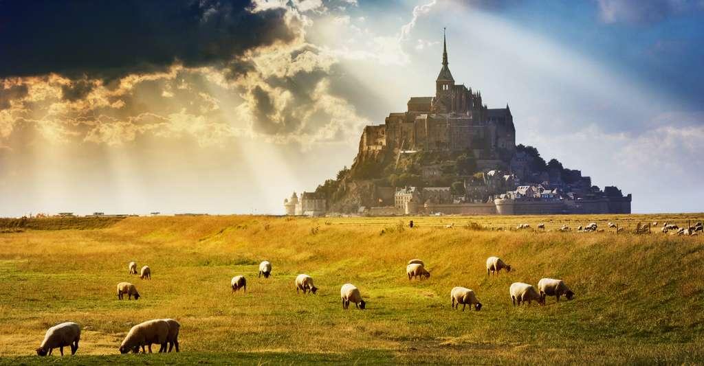Le Mont-Saint-Michel et ses moutons de pré-salé