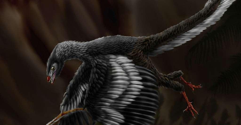 Illustration d'un archéoptéryx (ou Archaeopteryx). © Durbed, CC by-sa 3.0