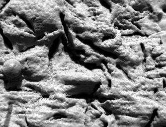 Fig. 8 Empreintes de cristaux de gypse (en haut). En bas, pseudomorphoses de cristaux de gypse recristallisés en goethite.