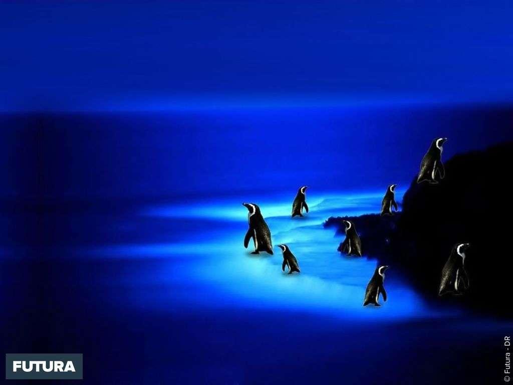 Banquise bleu nuit