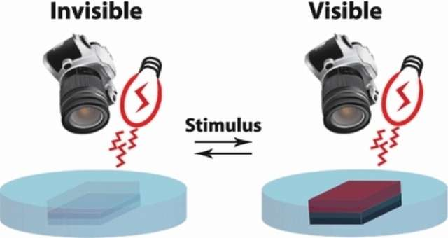 Une illustration du film biomimétique à base de réflectine, la protéine utilisée par les calmars pour changer de couleur. Sous l'action d'un stimulus, ici de l'acide acétique, le film devient visible ou invisible dans l'infrarouge proche. C'est la première fois que l'on obtient un film inspiré par la biologie capable de se cacher des caméras infrarouge usuelles. © John Wiley & Sons, Inc.
