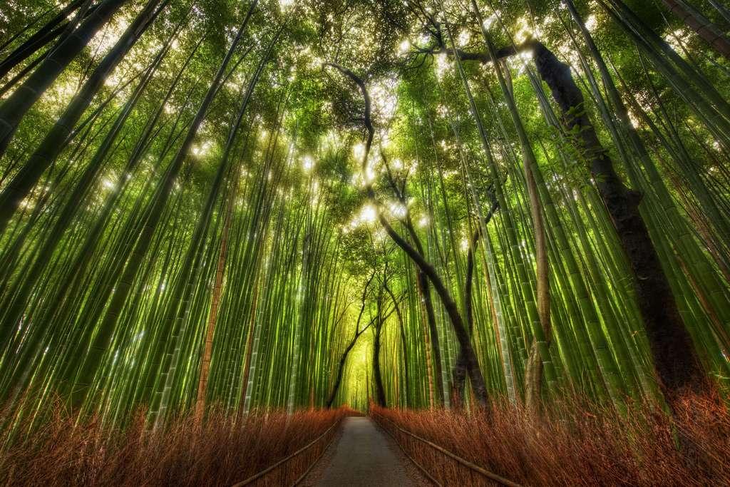 Selon la FAO, environ 13 millions d'hectares de forêts disparaissent annuellement sur Terre. La carte développée par Global Forest Watch devrait permettre de connaître l'évolution du phénomène et de mieux le maîtriser. © Stuck in Customs, Flickr, cc by nc sa 2.0