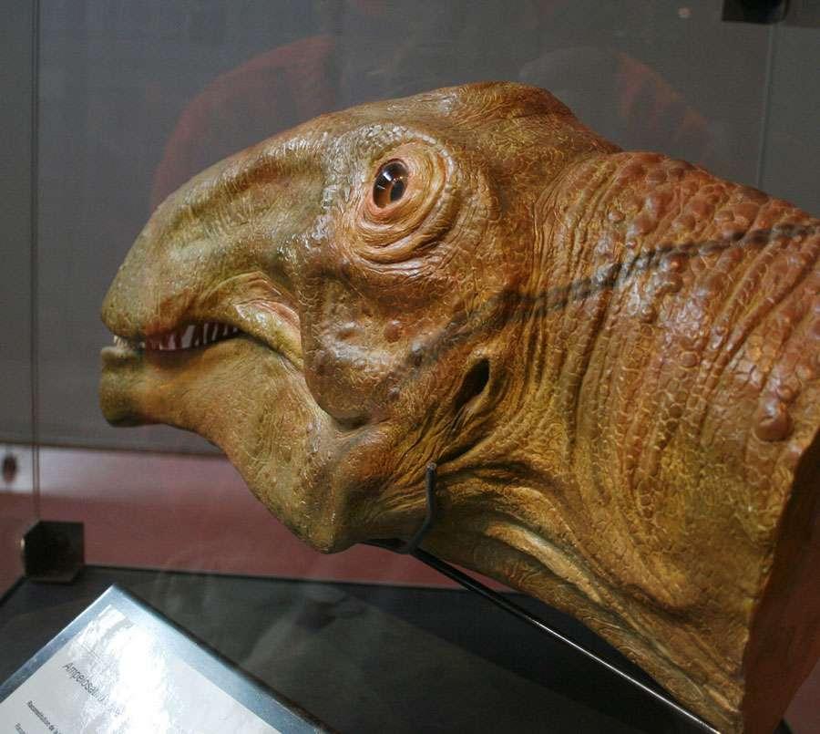 Ampelosaurus moulage