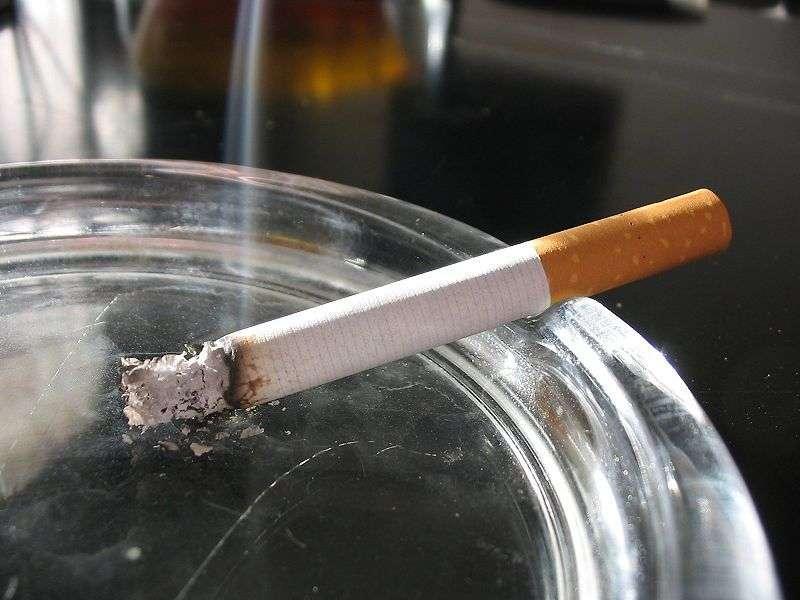 Le menthol désensibilise les récepteurs dans les poumons et les voies respiratoires et pénètre encore plus les tissus pulmonaires. Son interdiction a été votée par le Parlement européen pour 2022. © Tomasz Sienicki, Wikipédia, CC by-sa 3.0