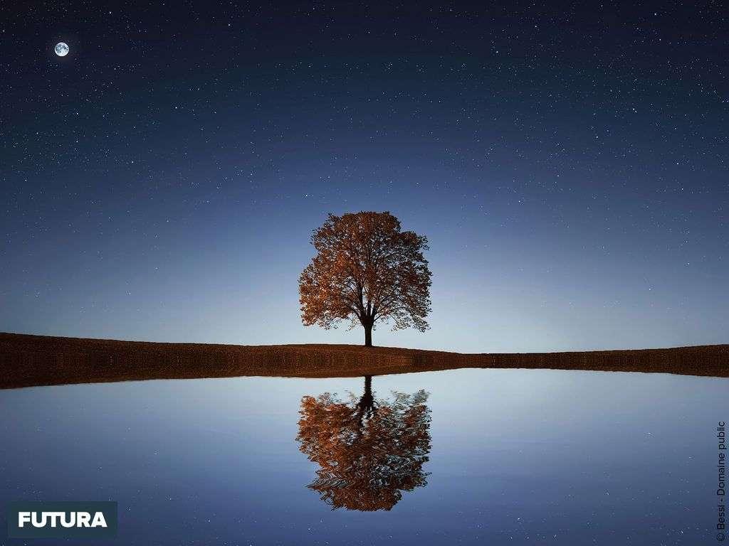 Crépuscule : l'arbre au miroir