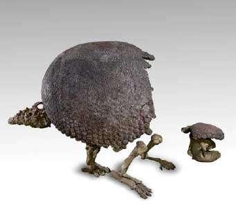 Darwin a découvert quelques fossiles durant son voyage circumterrestre de 1831 à 1836, en particulier des restes de gros mammifères sud américains éteints (ici Glyptodondu Muséum de la Ville de Genève) © Philippe Wagneur, MHNG