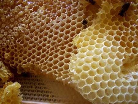 De la cire d'abeille. © Merdal, GNU