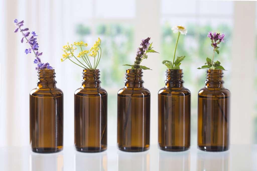 L'huile essentielle de fenouil est l'alliée des femmes : elle aide à réguler le cycle menstruel, soulage des effets de la ménopause et les règles douloureuses. © JPC-PROD, Fotolia