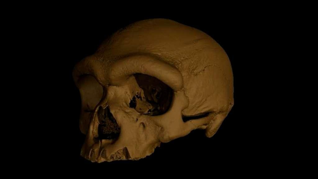 Reconstruction virtuelle du crâne de Harbin. © Xijun Ni