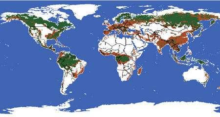 Durant ces cinq derniers siècles, les forêts primaires ont été profondément modifiées par diverses activités humaines. En vert, les grands blocs de forêts encore intacts aujourd'hui. En rouge, les forêts altérées (exploitées, en exploitation, ou simplement disparues ...).