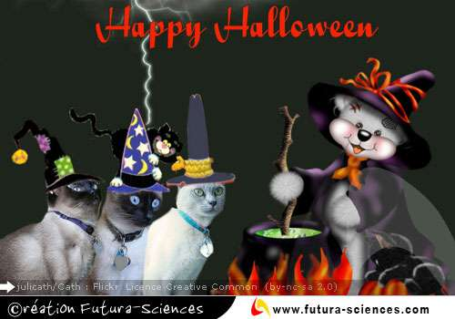 Halloween ! Halloween !!