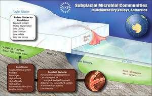 Le glacier Taylor emprisonne une réserve d'eau salée sous 400 mètres de glace, la privant de lumière et d'oxygène... et la protégeant de la visite des chercheurs. Mais des effluents, couleur rouge sang, provenant de cette baignoire isolée, diffusent à l'intérieur de la glace et se déversent sur la banquise recouvrant le lac Bonney. Dans ces effluents, des biologistes ont découvert des traces d'activité bactérienne, démontrant que des micro-organismes vivent depuis au moins 1,5 million d'années dans cette poche d'eau et sont adaptés à ce curieux environnement. (Cliquer sur l'image pour l'agrandir.)
