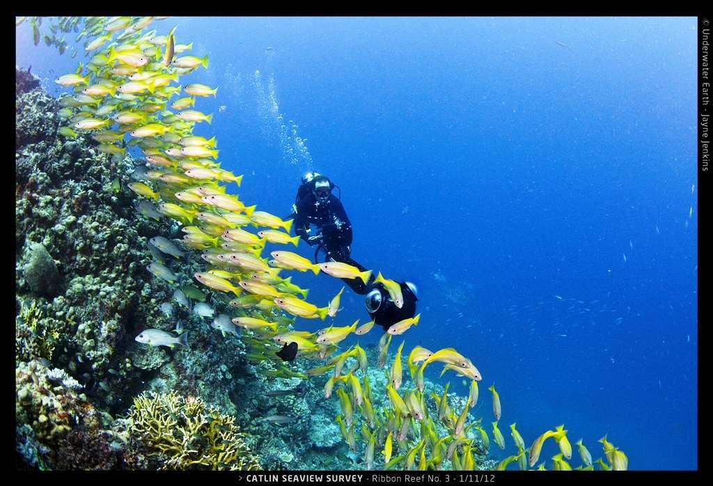 Christophe Bailhache, le directeur des opérations du Catlin Seaview Survey, en plein travail sur la Grande Barrière de corail en Australie en 2012. Les opérations pour 2014 sont sur le point de débuter aux Philippines dans le cadre de la campagne de l'Asie du Sud-Est. © Catlin Seaview Survey, Jayne Jenkins