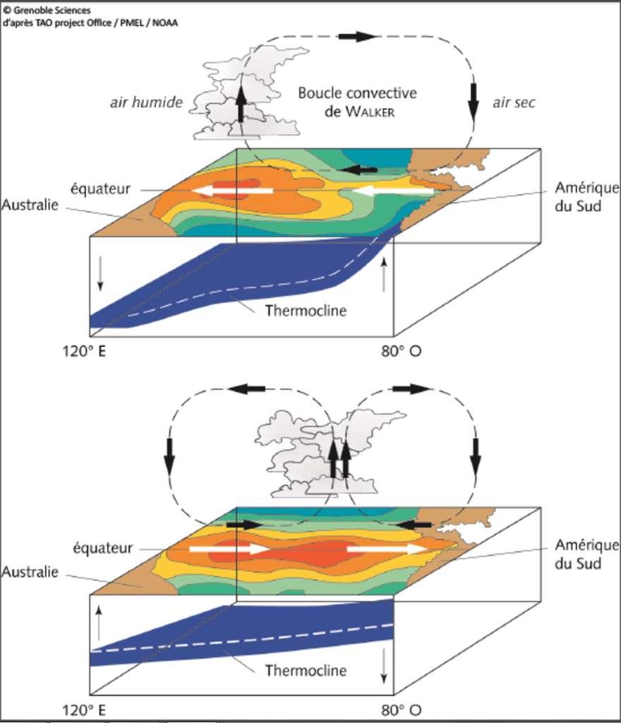 Illustration de l'interaction entre la cellule de Walker et le phénomène El Niño. En haut, la cellule de Walker est active, elle accentue le courant d'est équatorial et pousse les eaux chaudes vers la côte ouest de l'océan Pacifique. En bas, la cellule de Walker s'est effondrée et divisée, les eaux chaudes accumulées à l'ouest de l'océan Pacifique refluent vers l'Amérique centrale à l'est. Les flèches fines montrent le déplacement de la thermocline. © D'après TAO Project Office (directeur : Michael J. McPhaden), PMEL, NOAA