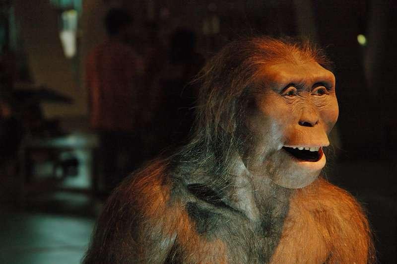 Lucy est l'australopithèque le plus connu et aussi une de nos lointaines ancêtres. © Carlos Lorenzo, Flickr, CC by-nc-nd 3.0