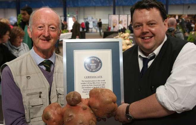 Peter Glazebrook, jardinier de tous les records, pose avec sa pomme de terre de 5 kg. Elle demeure à ce jour la plus lourde jamais cultivée. © Guinness World Records