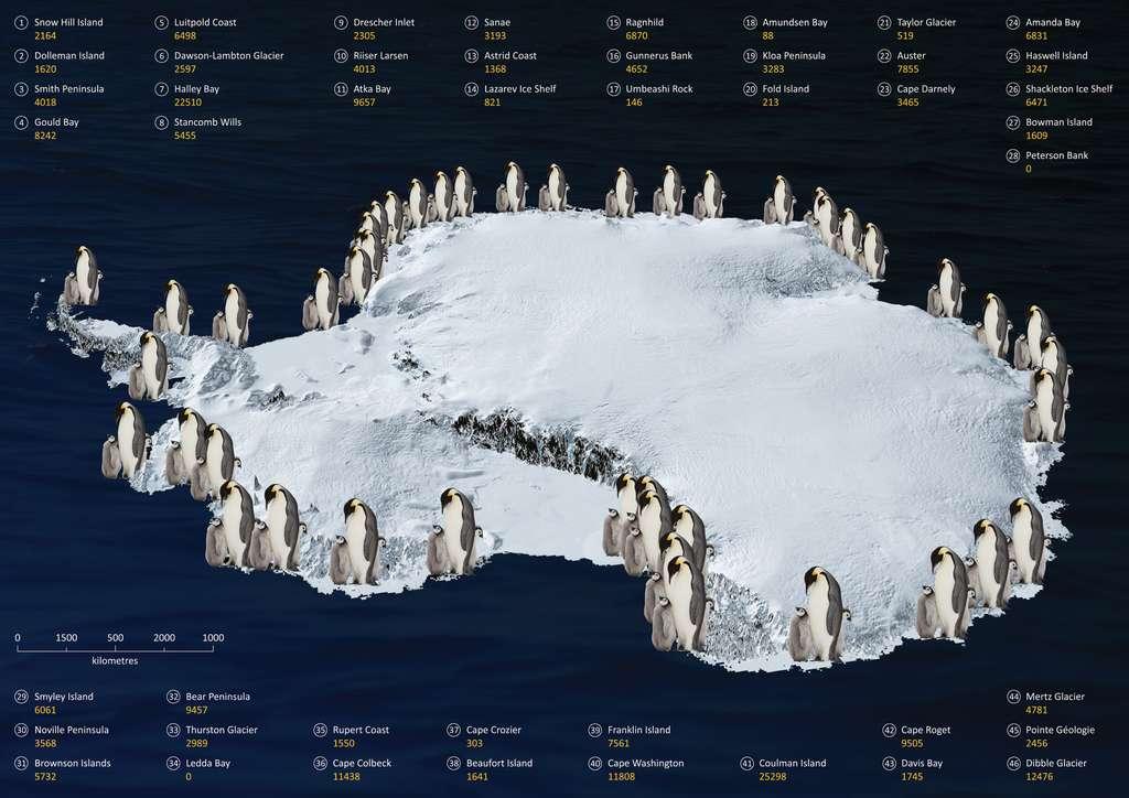 Répartition des colonies de manchots empereurs autour de l'Antarctique avec l'estimation du nombre d'individus pour chaque groupe. © British Antarctic Survey