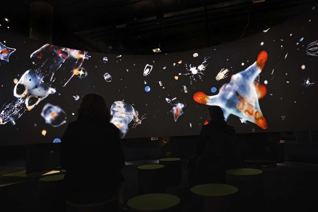 Plongée au milieu du plancton microscopique à travers un court-métrage projeté à 360° sur l'exposition « Océan : une plongée insolite ». © MNHN, J.-C. Domenech