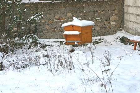 Ruche en hiver. © Sylvie Nomblot, DR