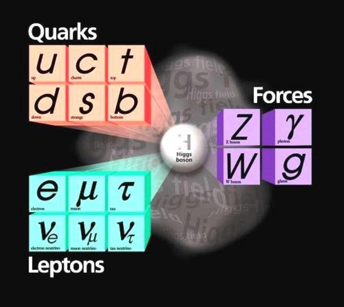 Le modèle standard de la physique des particules décrit les interactions entre leptons et quarks par l'intermédiaire de trois forces. Ces forces sont transmises par les gluons g (interaction forte), les W et Z (interaction faible) et les photons (électromagnétisme). © Fermilab.