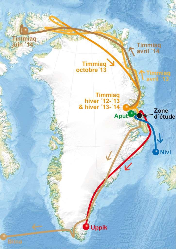 Les scientifiques ont suivi les déplacements de cinq chouettes harfangs munies de balises Argos sur l'île de Traill (nord-est du Groenland). Timmiaq est une femelle adulte, les quatre autres étaient des juvéniles. © LPO, tous droits réservés